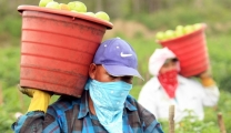 Are you hiring migrant farm workers? Then notice these things!
