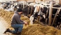 農業労働力