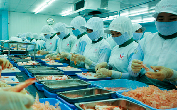 Vietnam Food Processing Worker